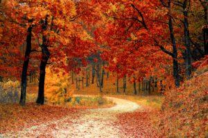 Wandern ist eine gute Möglichkeit, um aus dem Alltag zu entfliehen und die Natur zu genießen.